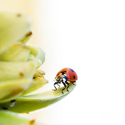 Ladybird On Desert Flower Poster by Jane Rix