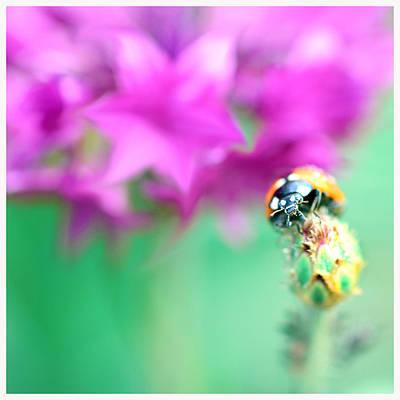 Ladybug On Beautiful Bud Poster