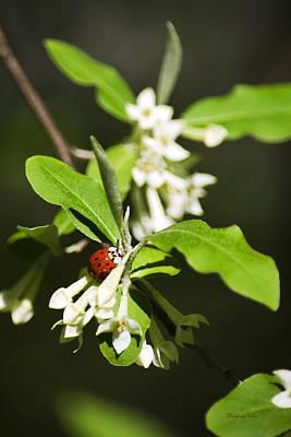 Ladybug And Flowers Poster