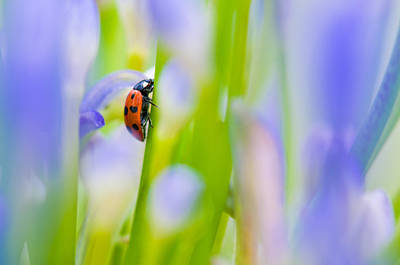 Ladybug Poster by Ulrich Schade
