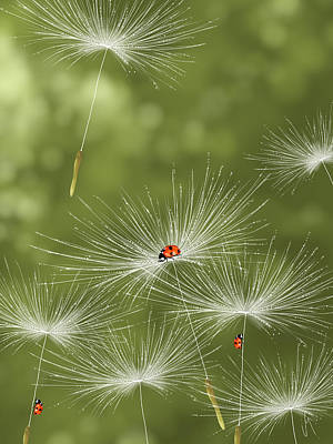 Ladybug Poster by Veronica Minozzi