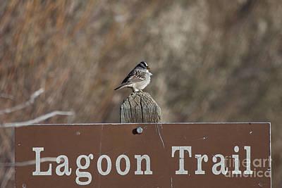 Lagoon Trail Gatekeeper Poster by Douglas Barnard