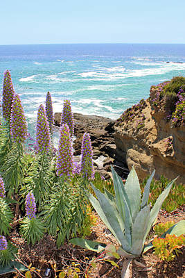 Laguna Coast With Flowers Poster