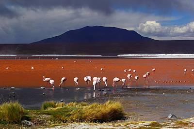 Laguna Colorada Poster