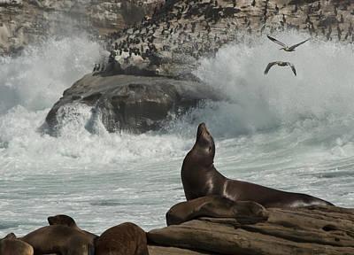 Lajolla Surf N Nature Preserve Poster by Daniel Hebard