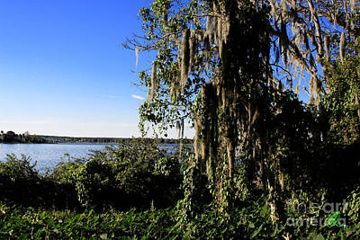 Poster featuring the photograph Lake Apopka 1 by Chris Thomas