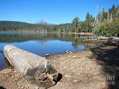 Poster featuring the photograph Lake Of The Woods 5 by Debra Thompson