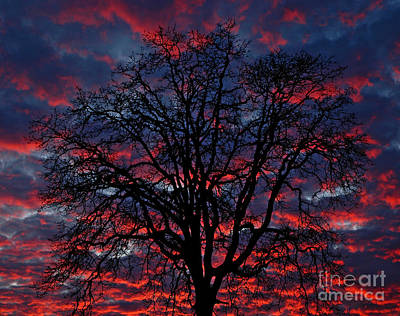 Poster featuring the photograph Lake Oswego Sunset by Nick  Boren