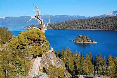 Lake Tahoe Reaching Tree Poster