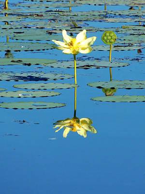 Lake Thomas Water Lily Poster