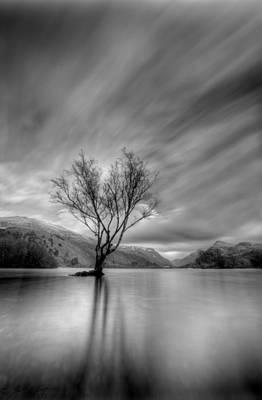 Lake Tree Mon Poster