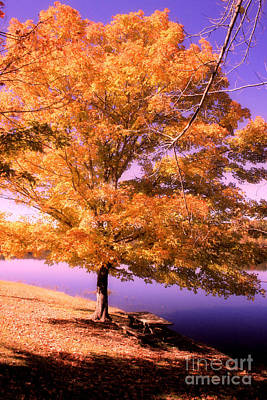 Lakeside Tree Poster