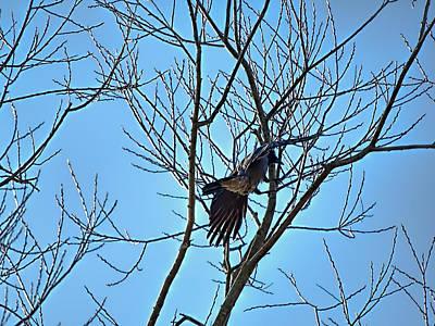 Landing Crow Poster