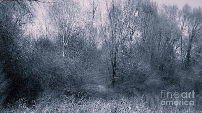 Landscape A10b Taos Nm Poster