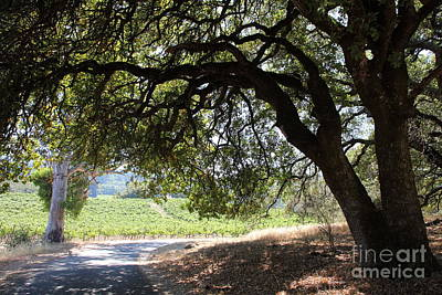 Landscape At The Jack London Ranch In The Sonoma California Wine Country 5d24583 Poster