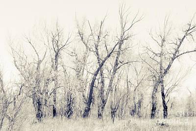 Landscape E10f Taos Nm Poster