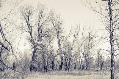 Landscape E10i Taos Nm Poster