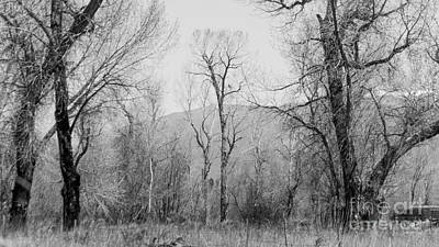 Landscape E10x Taos Nm Poster