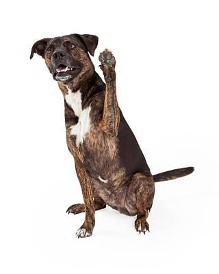 Large Brindle Dog Raising Paw Poster