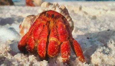Large Hermit Crab On The Beach Poster by Dan Sproul