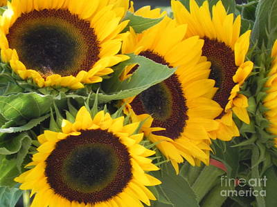 Poster featuring the photograph Large Sunflowers by Chrisann Ellis