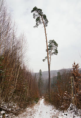Large Trees In The Nature Park In Winter Poster