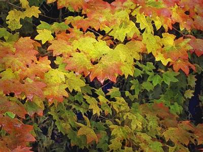 Last Year's Autumn Leaves Poster by Philip White