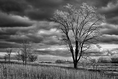 Late Afternoon At Walnut Creek Lake #2 - Black And White Poster by Nikolyn McDonald