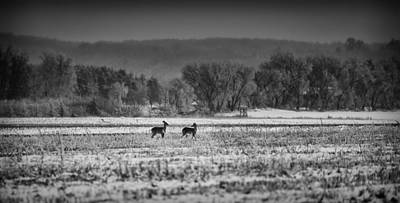 Late Winter Whitetails Poster by Thomas Young
