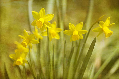 Laughing Dafs Poster