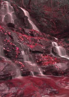 Laurel Falls In Red Poster by Dan Sproul