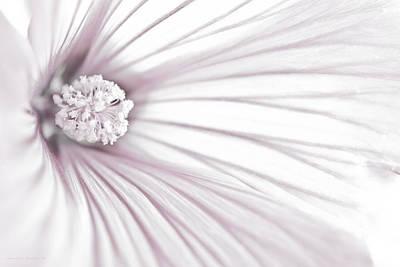 Lavatera Flower Stamen Macro  Poster by Sandra Foster
