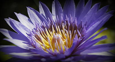 Poster featuring the photograph Lavendar Lily by Laurie Perry