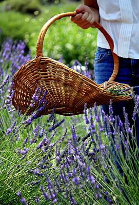 Lavender And Basket Poster
