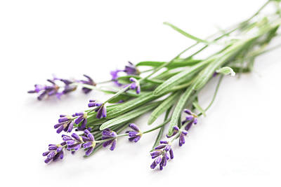Lavender Poster by Elena Elisseeva