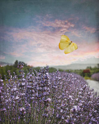 Lavender Field Pink And Blue Sunset And Yellow Butterfly Poster