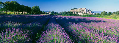 Lavender Field, Provence-alpes-cote Poster by Panoramic Images