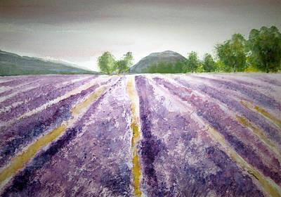 Lavender Fields Tasmania Poster by Elvira Ingram