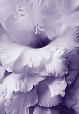 Lavender Lace Gladiola Flower Poster by Jennie Marie Schell