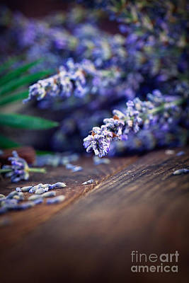 Lavender Poster by Mythja  Photography