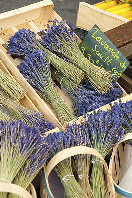 Lavender Of Provence Poster by Karma Boyer