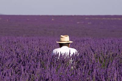 Lavender - Provence Poster by Karim SAARI