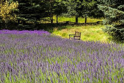 Lavender Rest Poster
