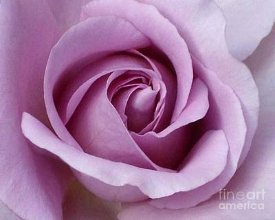Poster featuring the photograph Lavender Rose Blossom 1 by Paul Clinkunbroomer