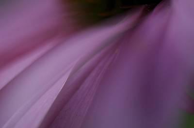Lavender Slide 2 Poster