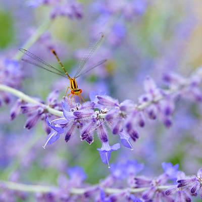 Lavender's Surprise Poster by Carol Toepke