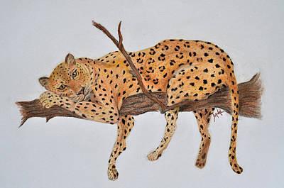 Lazy Leopard Poster by Danae McKillop