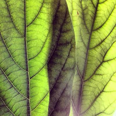 Leaf Abstract Poster by Christy Beckwith