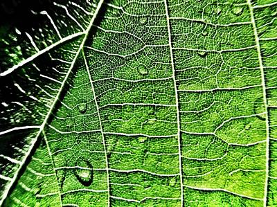 Leaf Abstract - Macro Photography Poster by Marianna Mills