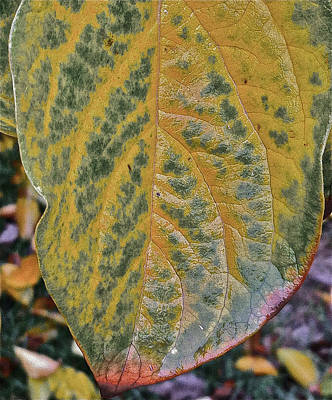 Leaf After Rain Poster by Bill Owen